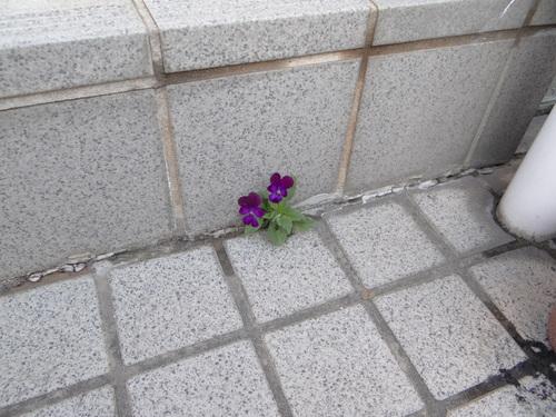 ミドリシジミ幼虫他~今朝の庭の状況~_d0254540_18332131.jpg