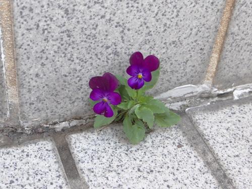 ミドリシジミ幼虫他~今朝の庭の状況~_d0254540_18333923.jpg