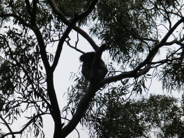 Morialta Conservation Parkに行ってきました。_f0234165_1644328.jpg