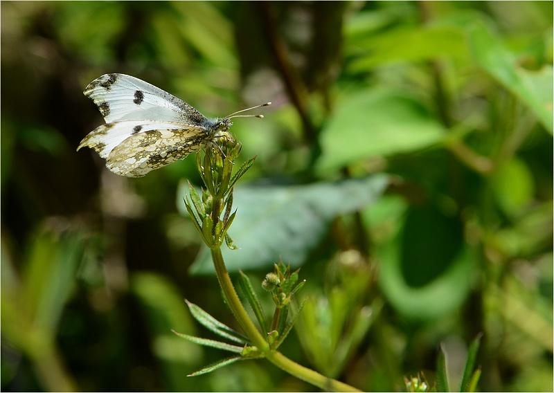 春の虫など_f0088971_0213474.jpg