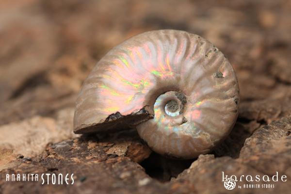 アンモナイト化石(マダガスカル産)_d0303974_11143130.jpg