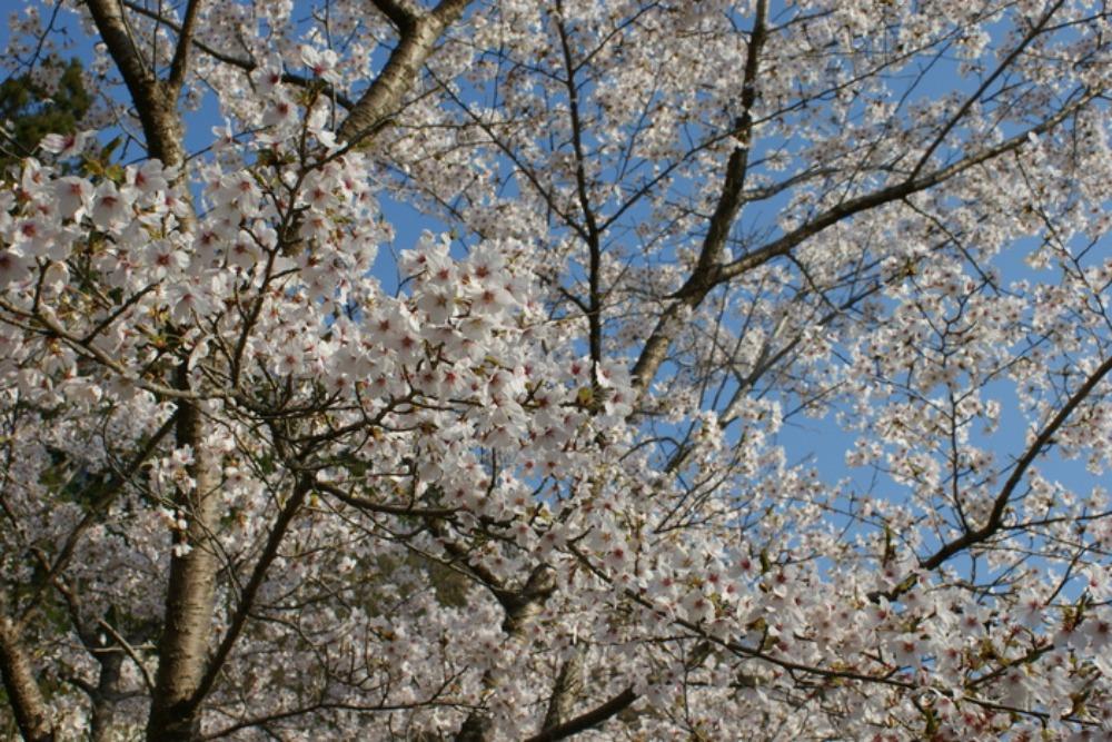 春の花Ⅱ_f0170180_115154.jpg