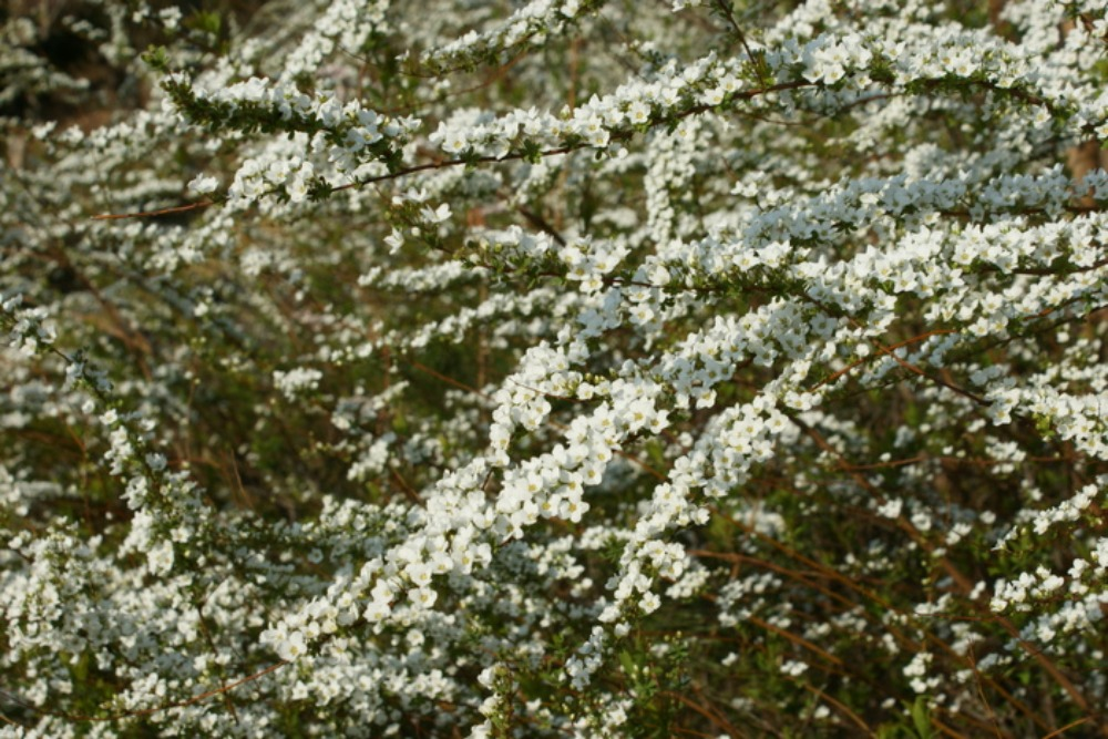 春の花Ⅱ_f0170180_1161228.jpg