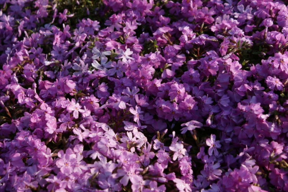 春の花Ⅱ_f0170180_117694.jpg