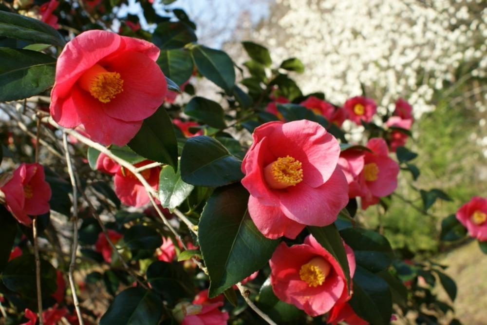 春の花Ⅱ_f0170180_143381.jpg