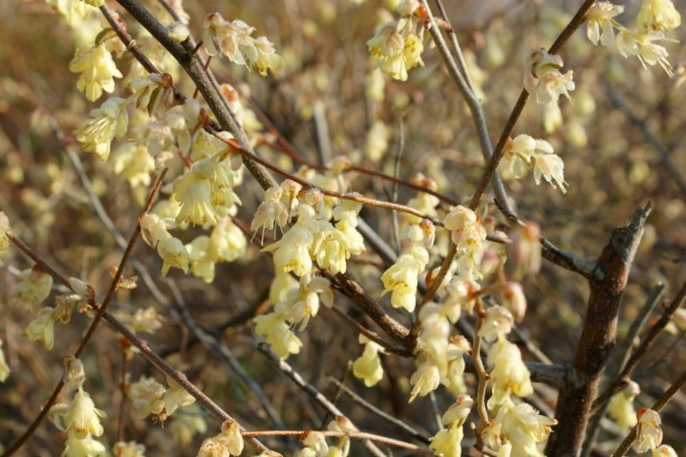 春の花Ⅱ_f0170180_155167.jpg
