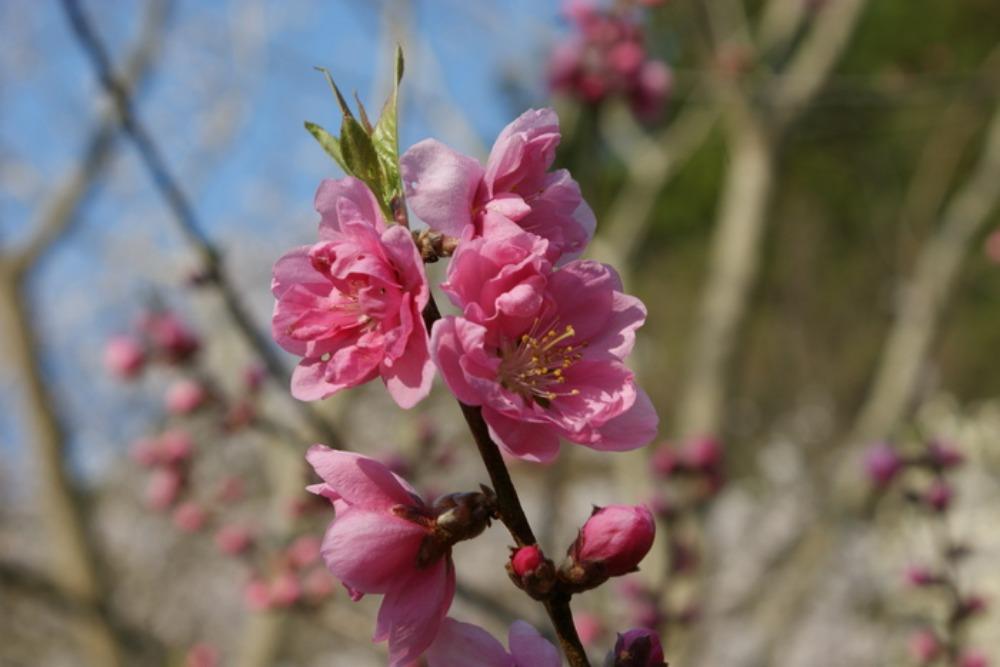春の花Ⅱ_f0170180_163933.jpg