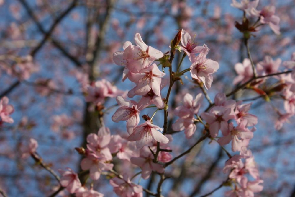 春の花Ⅱ_f0170180_183347.jpg
