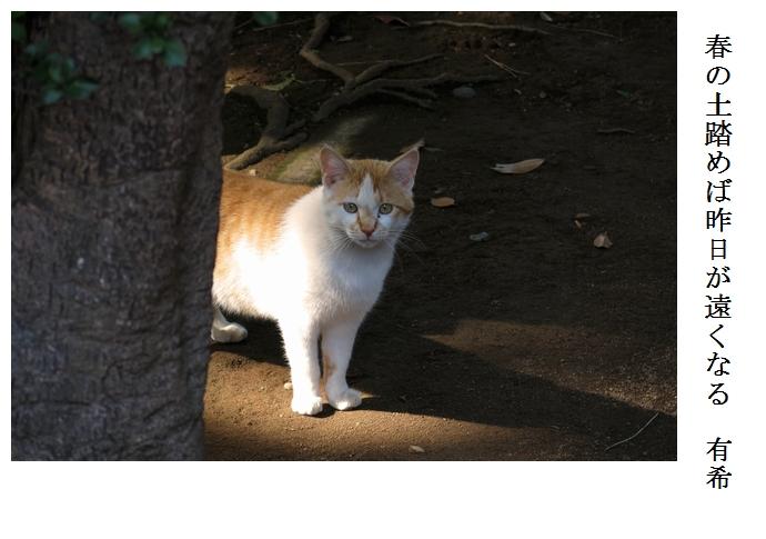 猫_a0248481_22574154.jpg