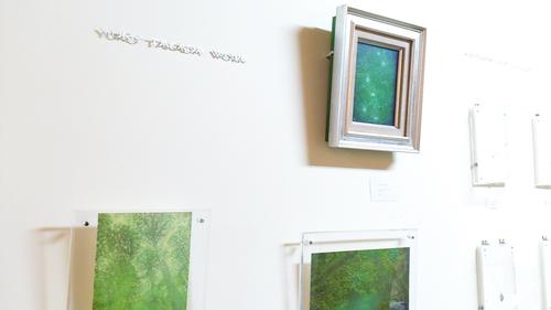 しずくギャラリーGW営業日、ヤクスギランド展示、雨の森。_b0240382_1173851.jpg