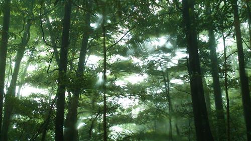 しずくギャラリーGW営業日、ヤクスギランド展示、雨の森。_b0240382_119236.jpg