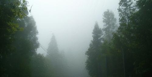 しずくギャラリーGW営業日、ヤクスギランド展示、雨の森。_b0240382_1293962.jpg