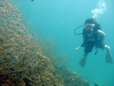 お魚いっぱい3ダイブ_f0144385_23235150.jpg