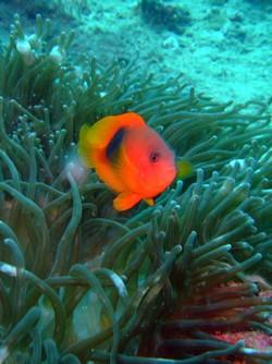 お魚いっぱい3ダイブ_f0144385_23251871.jpg
