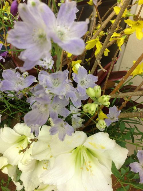 今週のお花とセール情報_a0200423_19425071.jpg