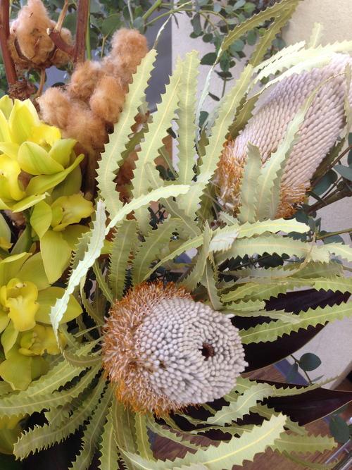 今週のお花とセール情報_a0200423_2041409.jpg