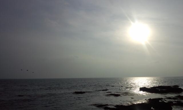 城ヶ島にはじめて行きました_e0114246_7134779.jpg