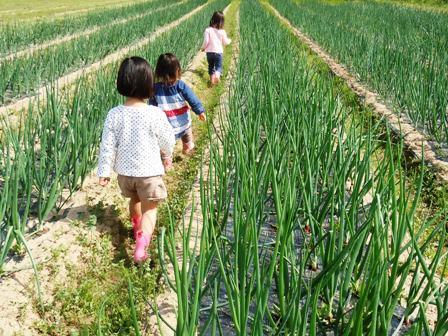 2013-05-18 Sat : お野菜の収穫体験_d0298850_21454980.jpg