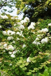 高知の庭 4月_a0163160_1122193.jpg