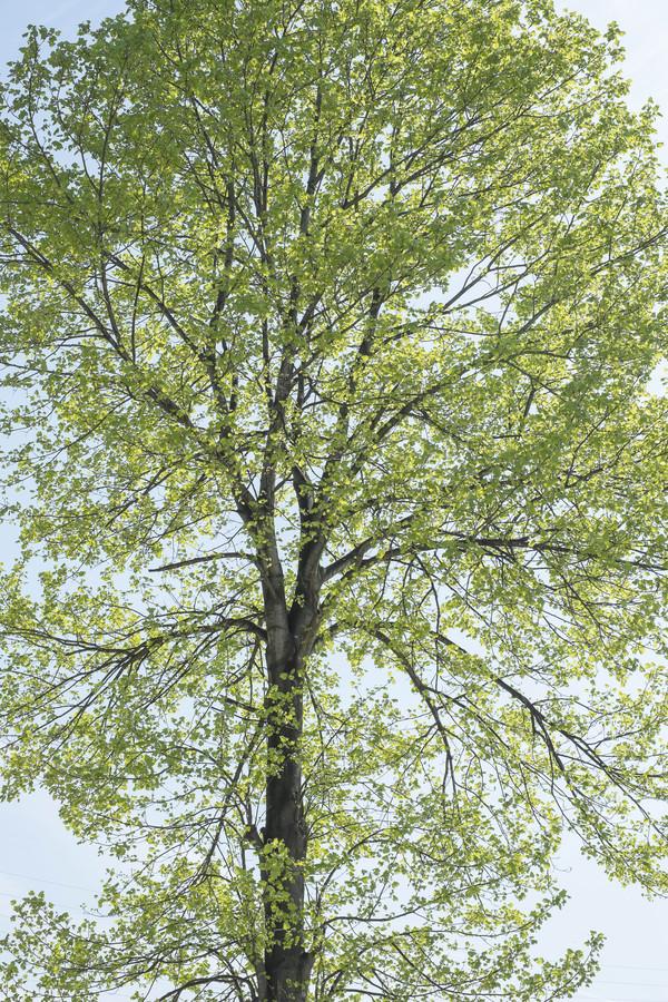 風薫る季節_e0321360_23395073.jpg