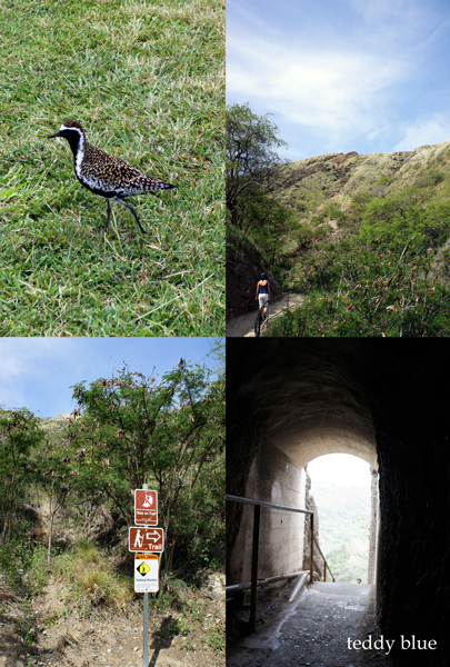 Diamond Head Hiking, Hawaii  ダイアモンドヘッド ハイキング_e0253364_9305828.jpg