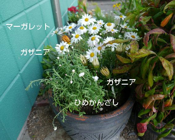 d0071596_2032566.jpg