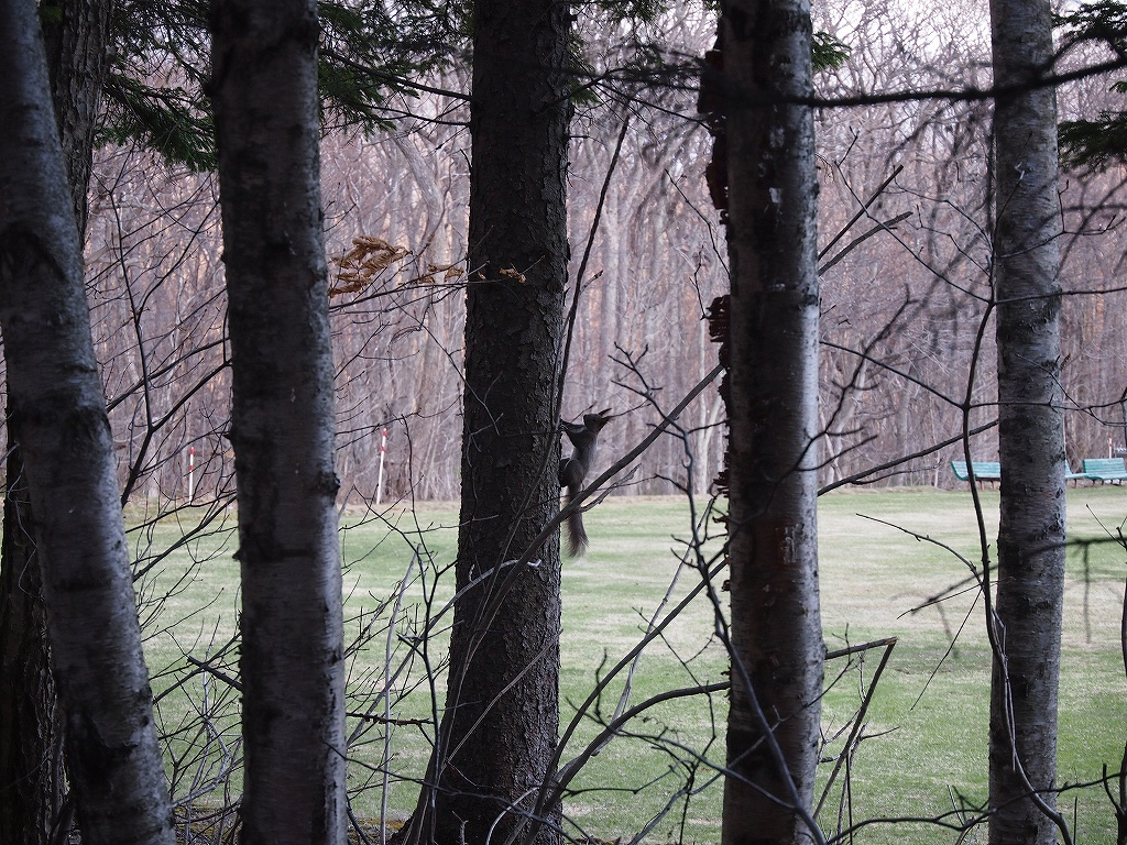 OLYMPUS PEN mini E-PM1を持って公園へ_f0138096_1531186.jpg