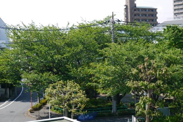 緑がまぶし_f0218911_18431687.jpg