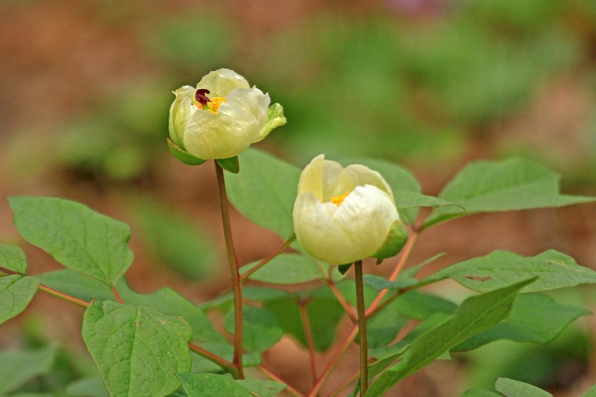 赤城自然園で出会った植物 ①_c0104227_12383718.jpg