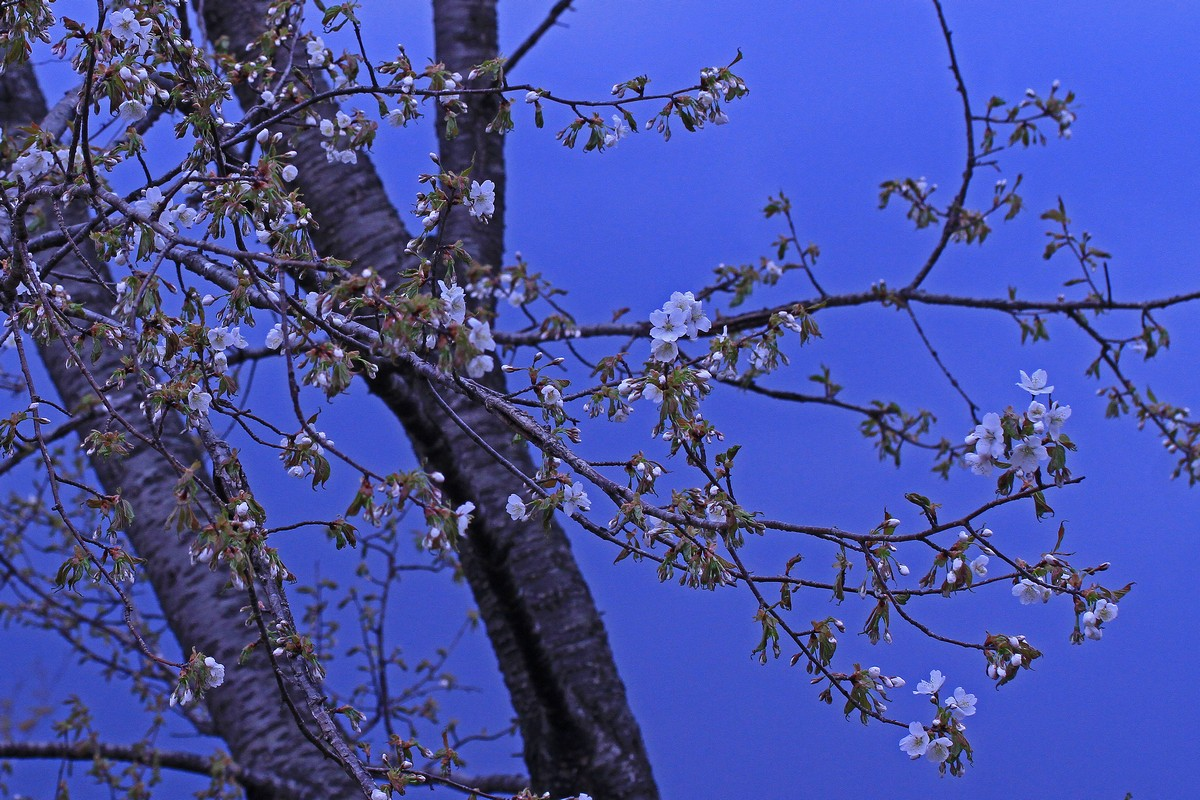 赤城自然園で出会った植物 ①_c0104227_8591559.jpg