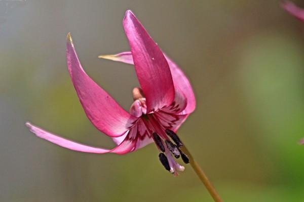 赤城自然園で出会った植物 ①_c0104227_927750.jpg