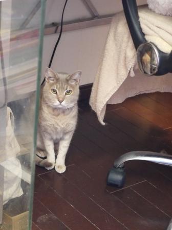 猫のお友だち シナモンちゃんプーちゃんとのくん編。_a0143140_21552315.jpg