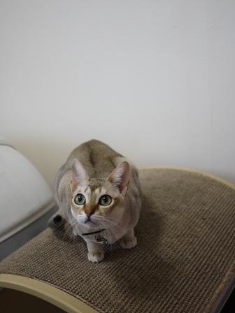 猫のお友だち シナモンちゃんプーちゃんとのくん編。_a0143140_21562374.jpg