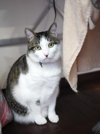 猫のお友だち シナモンちゃんプーちゃんとのくん編。_a0143140_21585968.jpg