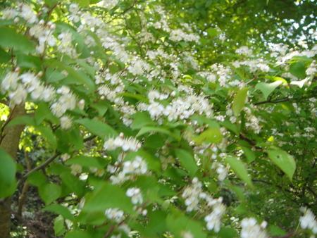 キンランが咲き始めました  in  孝子の森_c0108460_012228.jpg