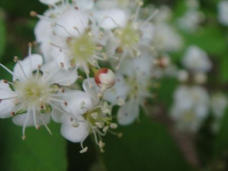 キンランが咲き始めました  in  孝子の森_c0108460_013053.jpg