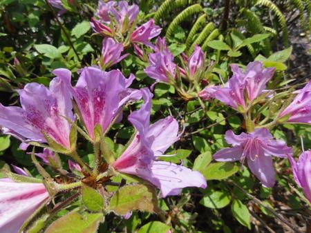 キンランが咲き始めました  in  孝子の森_c0108460_0151053.jpg