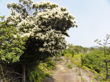 キンランが咲き始めました  in  孝子の森_c0108460_0161457.jpg