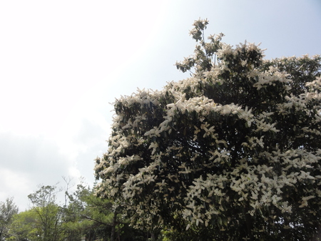 キンランが咲き始めました  in  孝子の森_c0108460_0165749.jpg