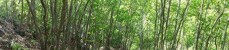 キンランが咲き始めました  in  孝子の森_c0108460_0191238.jpg