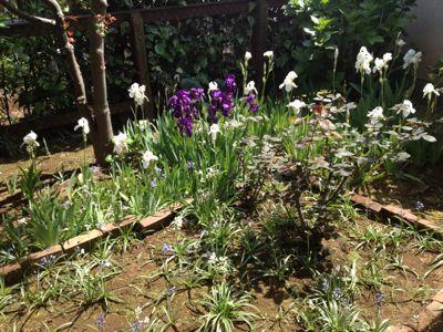 庭でスケッチレッスン!_c0131063_14471653.jpg