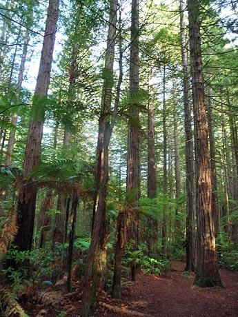 森の朝日_e0133780_17122811.jpg