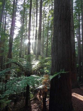森の朝日_e0133780_17123736.jpg
