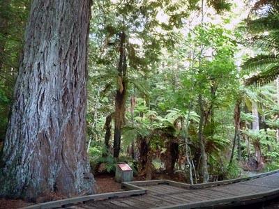 森の朝日_e0133780_17687.jpg