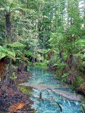 森の朝日_e0133780_178671.jpg