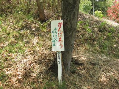 保久良神社(ほくらじんじゃ)_a0045381_1684890.jpg
