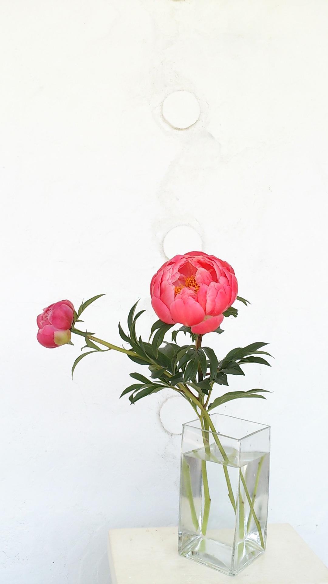 芍薬、胡蝶蘭、ガラスとしずくギャラリー。_b0240382_21493870.jpg