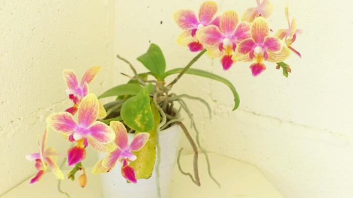 芍薬、胡蝶蘭、ガラスとしずくギャラリー。_b0240382_2212934.jpg