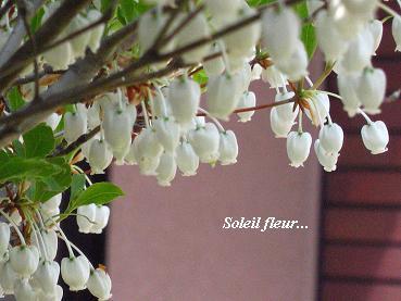 さわやかな季節の情景_c0098807_2030854.jpg