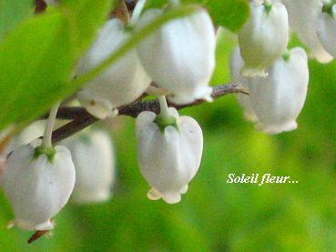 さわやかな季節の情景_c0098807_20555969.jpg